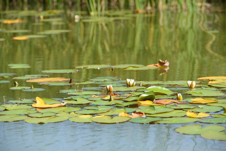 Máchov-jezero-foto-michal-hack-018
