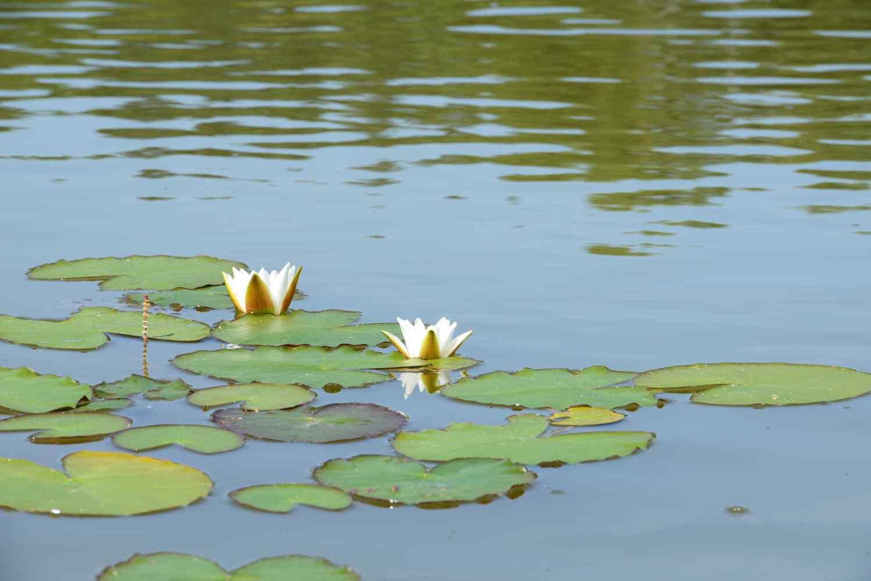 Máchov-jezero-foto-michal-hack-021