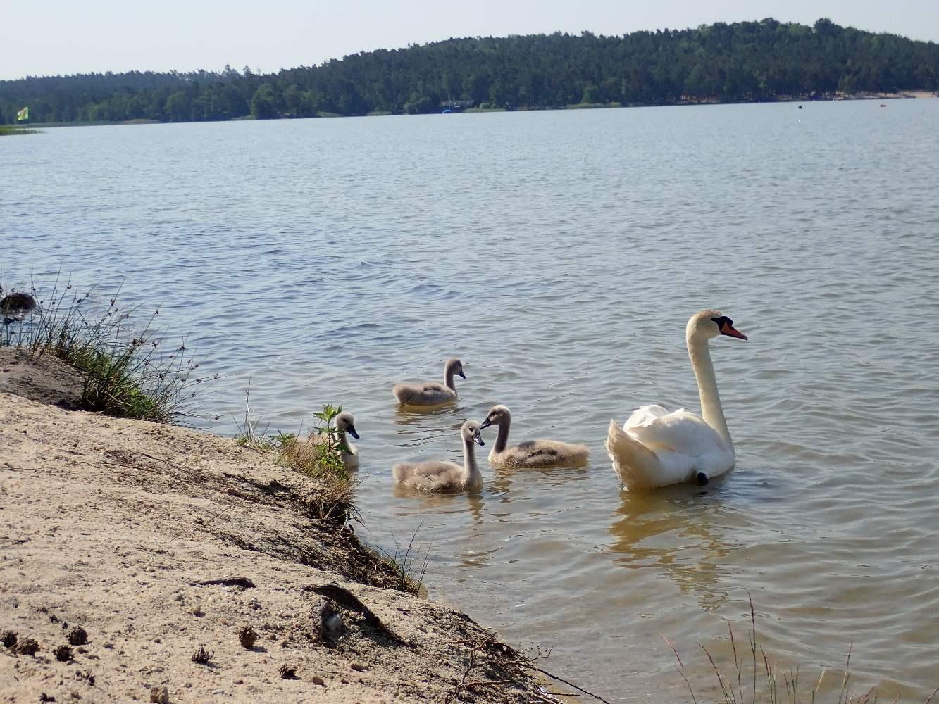 Machovo-jezero-001