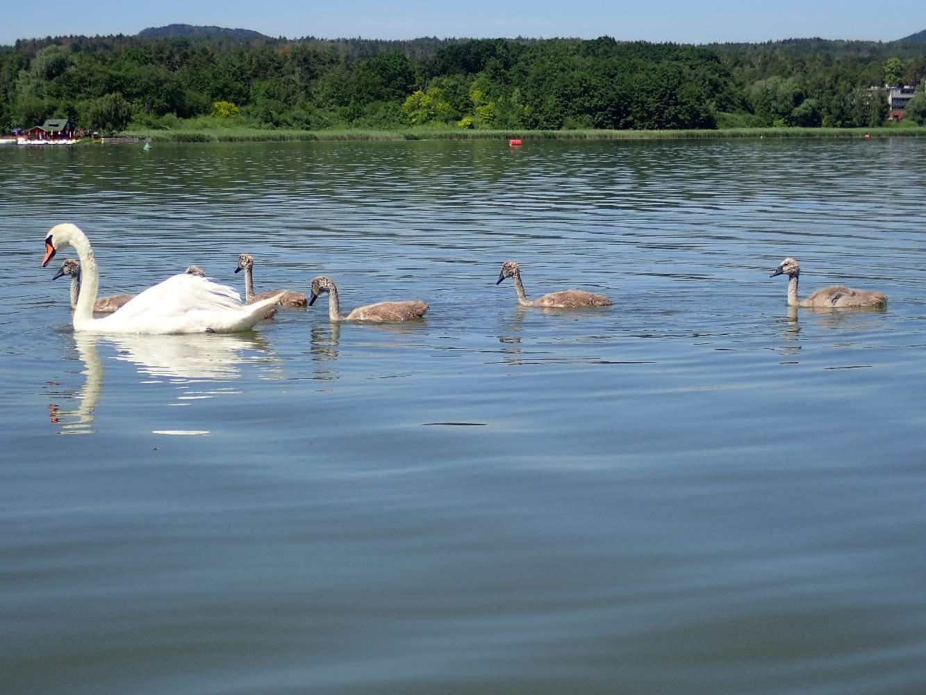 Machovo-jezero-016