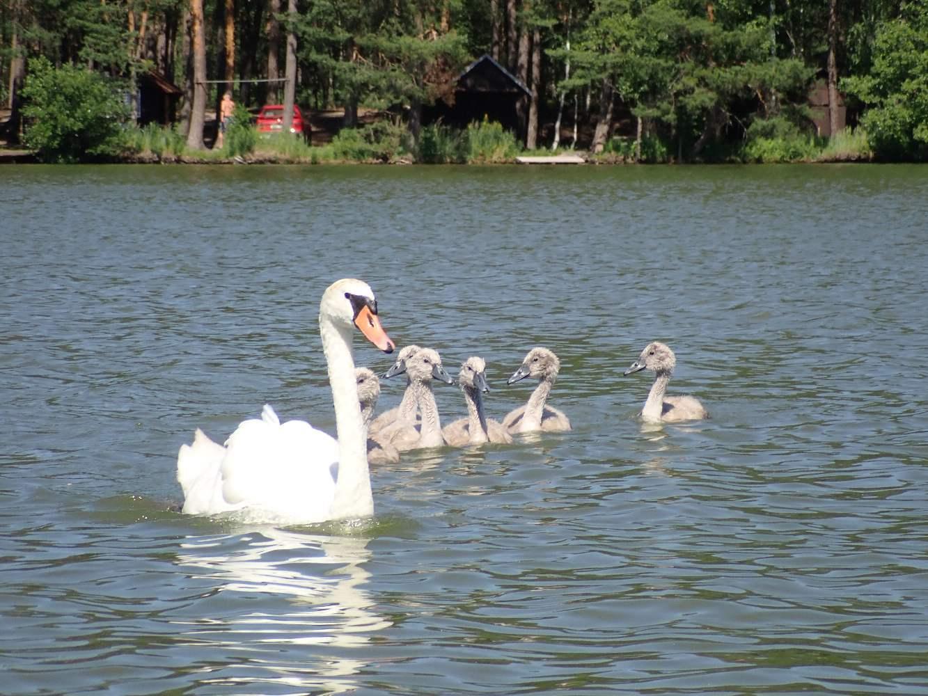 Machovo-jezero-019