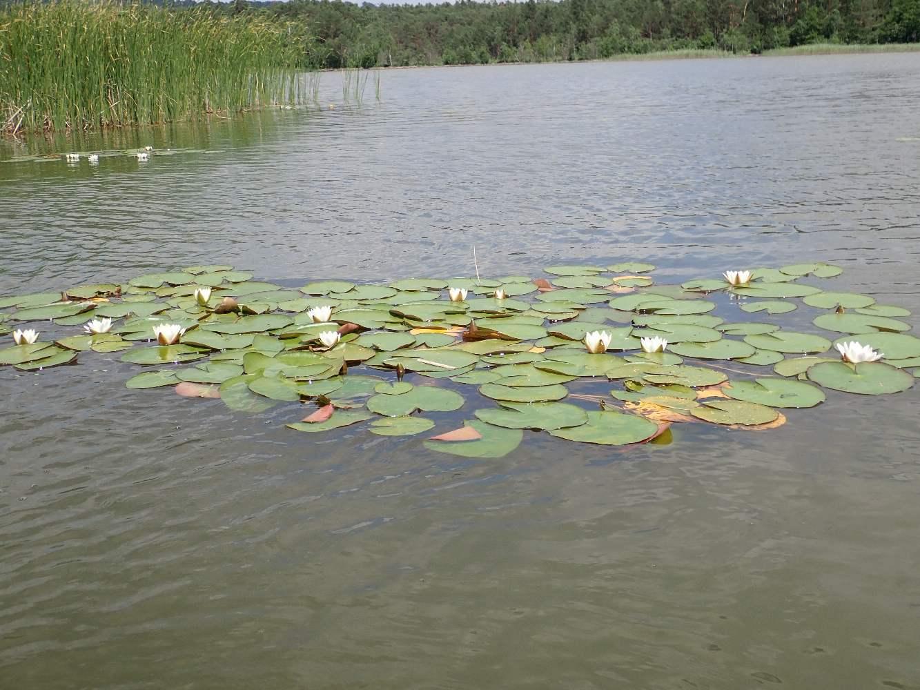 Machovo-jezero-040