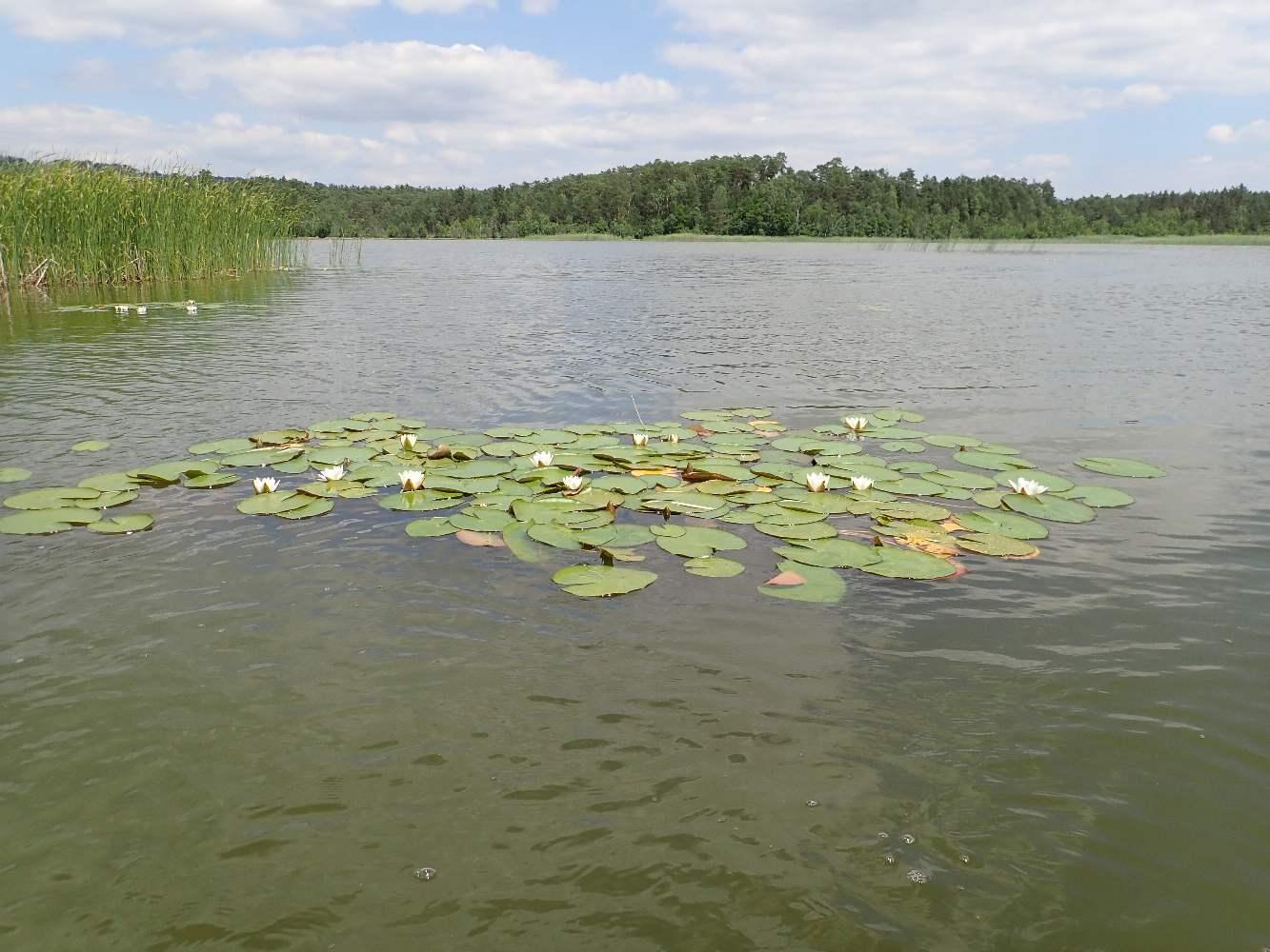 Machovo-jezero-041