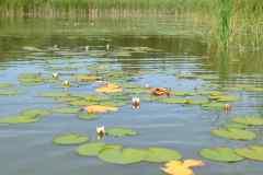 Máchov-jezero-foto-michal-hack-020