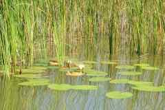 Máchov-jezero-foto-michal-hack-023