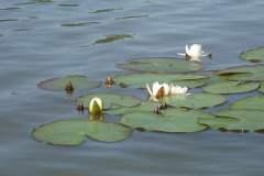 Machovo-jezero-021