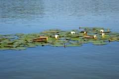 Machovo-jezero-023